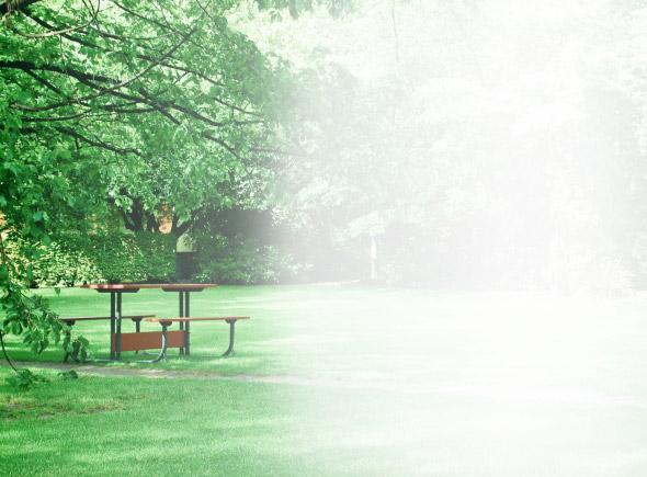 Рулонный газон «Парковый»