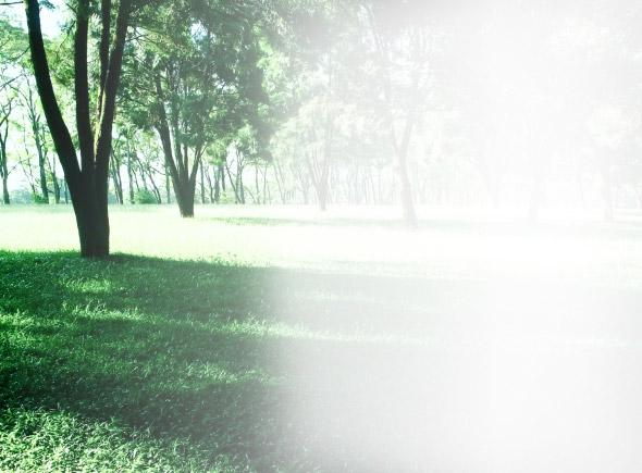 Рулонный газон «Теневыносливый» (элитный)